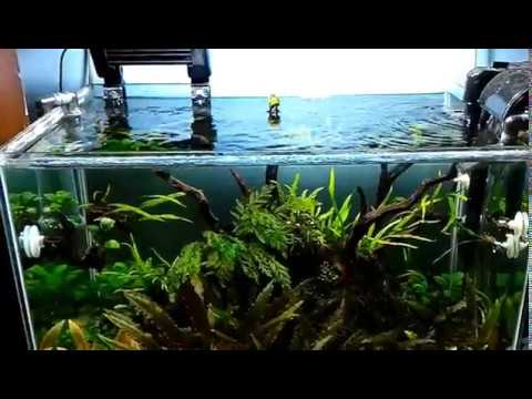 Tropical Day Aquascape Low Tech And Low Maintenance ~ Part 2