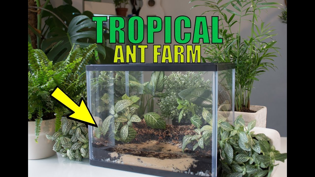 how to create pet proof ant trap